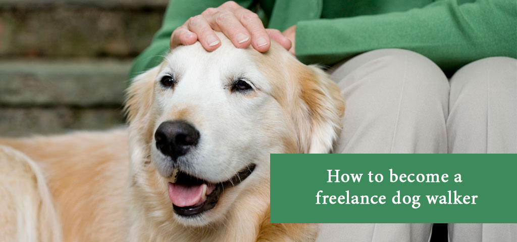 How to become a freelance dog walker