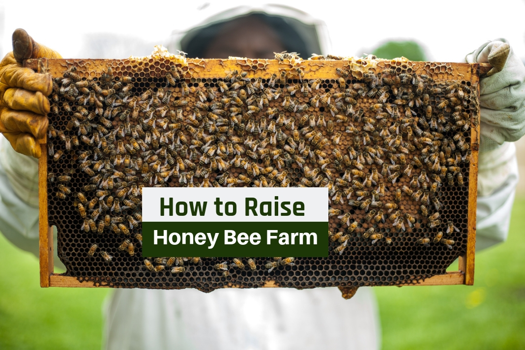 how to raise honey bee farm