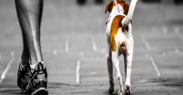 learn how to start dog walking business
