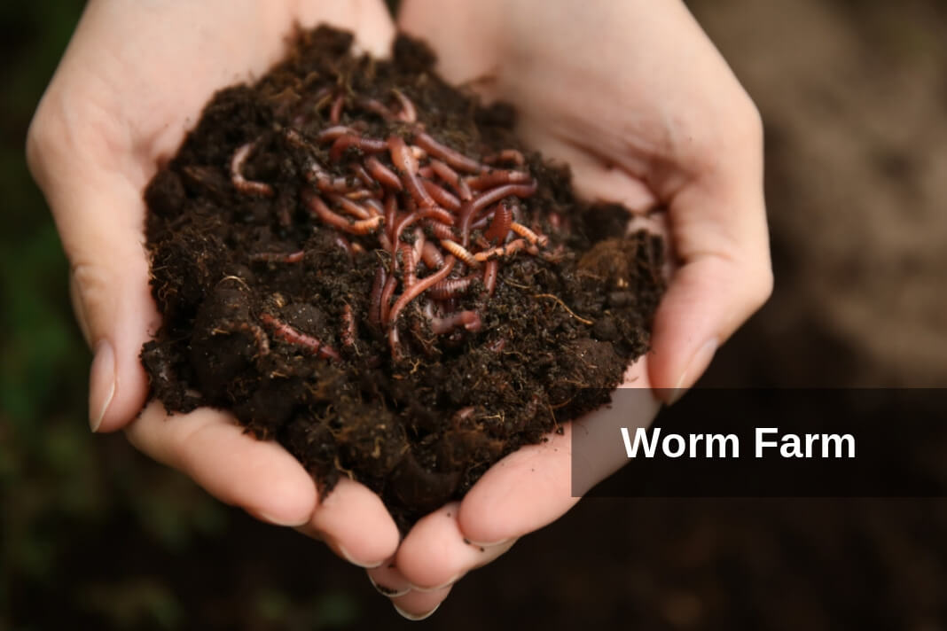 Build a Worm Farm