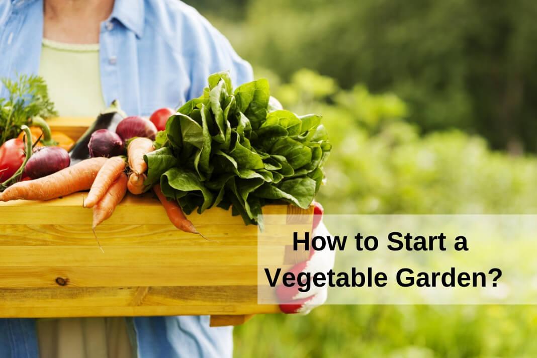 Start a Vegetable Garden