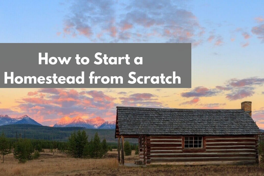 How to Start a Homestead from Scratch