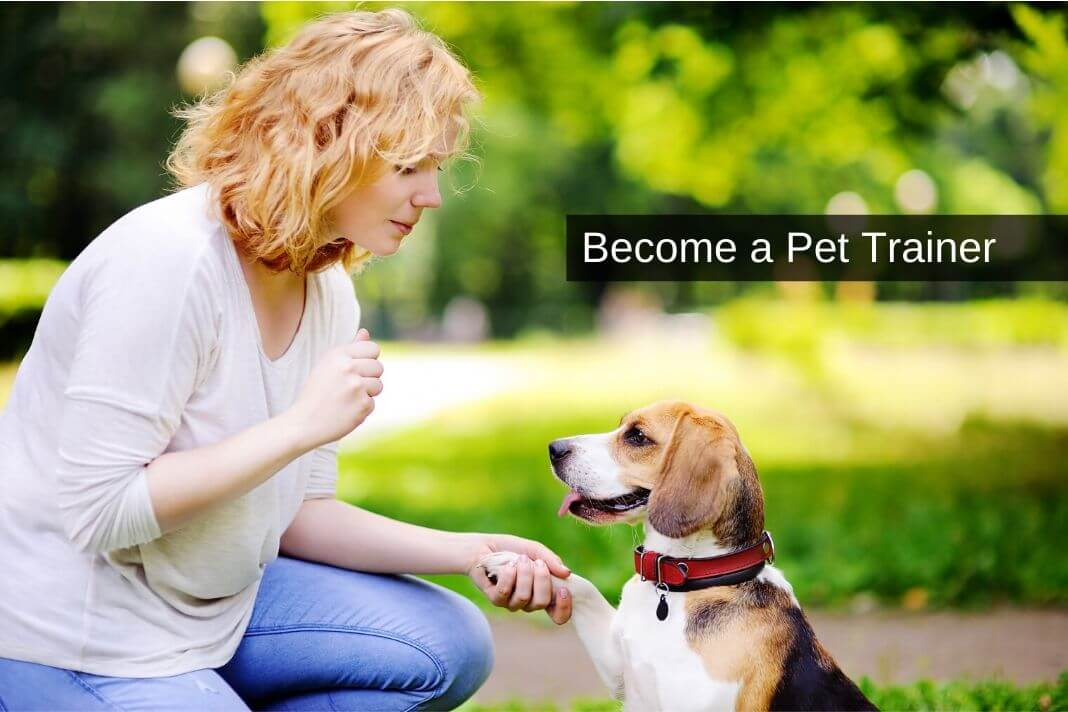 Become a Pet Trainer