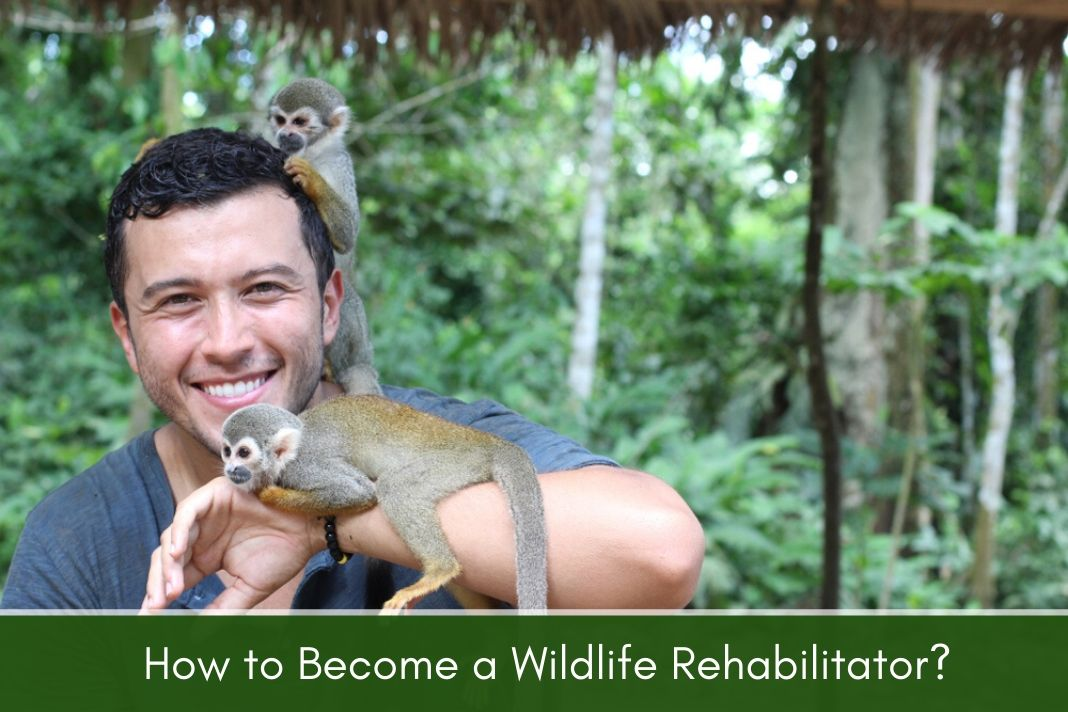 How to Become a wildlife rehabilitator